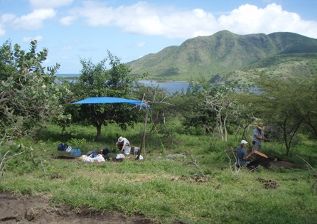 HRA crews excavating and enslaved Kittitian housesite at 18th-19th century slave village. HRA conducted heritage resource investigations for the Christophe Harbour development on St. Kitts to aid them in meeting their environmental protection commitments.