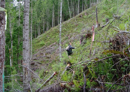 Archaeological survey on the Hancock Forest Management Forest Road 25 relocation project. The road relocation reopened a large swath of forested lands in the upper drainage for responsible forest practices.